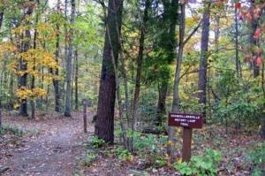 Chancellorsville History Trail