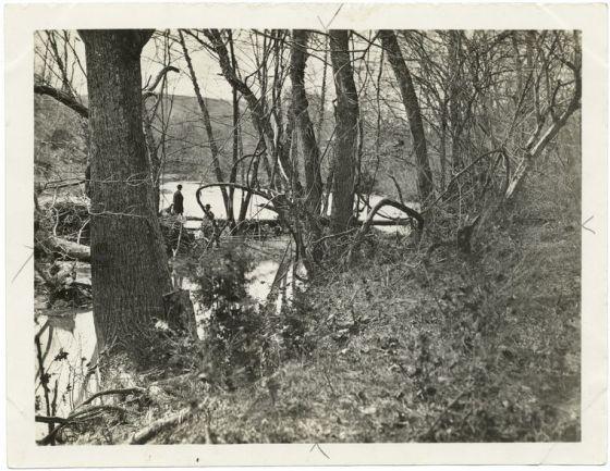 Wilderness near Chancellorsville